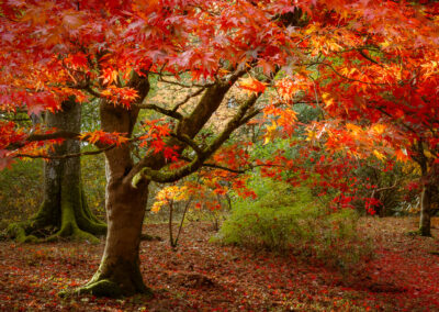 Autumn Reds by Martin Tomes